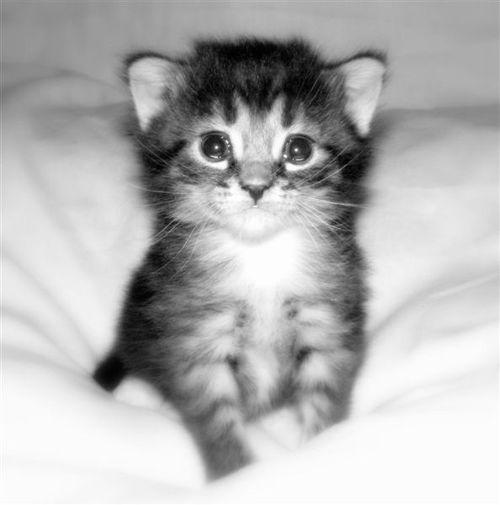 the_kittens_3.jpg